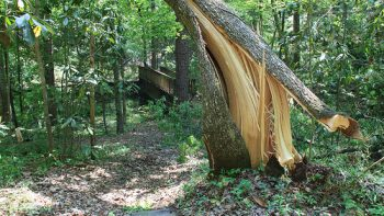 Permalänk till: Parkavverkning/Trädfällning