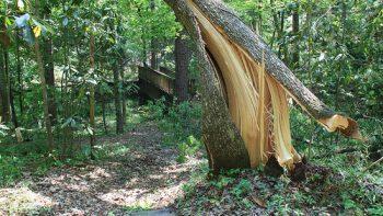 Permalänk till:Parkavverkning/Trädfällning